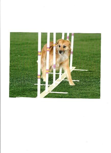 sayre-weave-poles-keystone-1